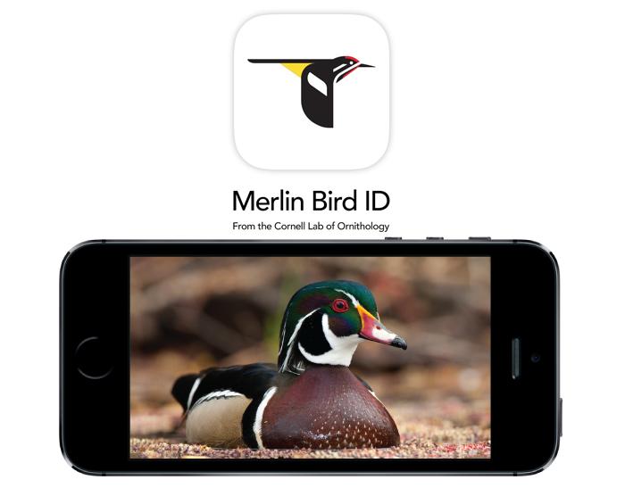 merlin-bird-app